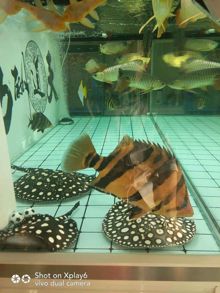 上善若水 厚德载物 北京观赏鱼 北京龙鱼第3张