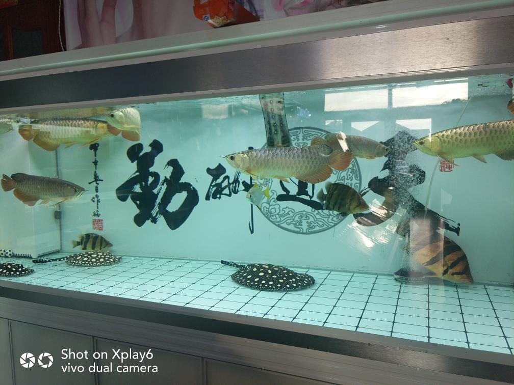 上善若水 厚德载物 北京观赏鱼 北京龙鱼第1张