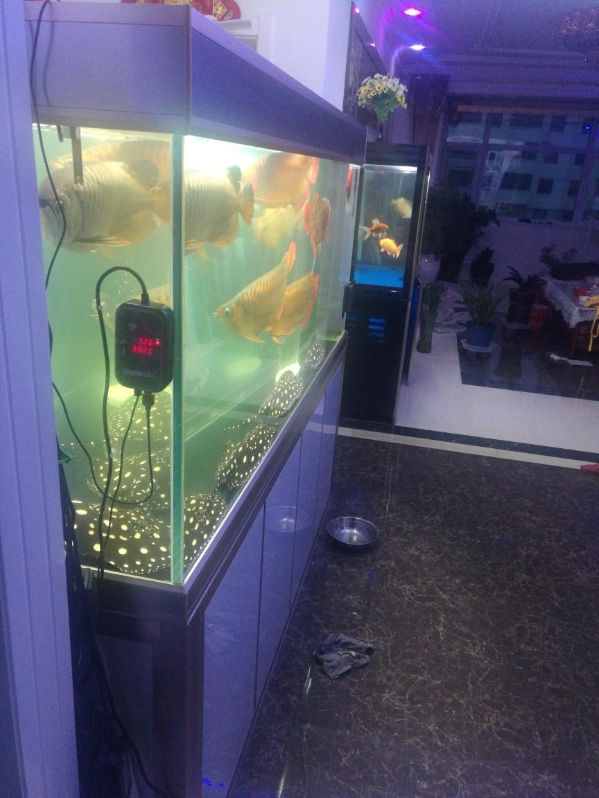 光特亿新产品在鱼友的期待中 西安水族批发市场 西安龙鱼第3张