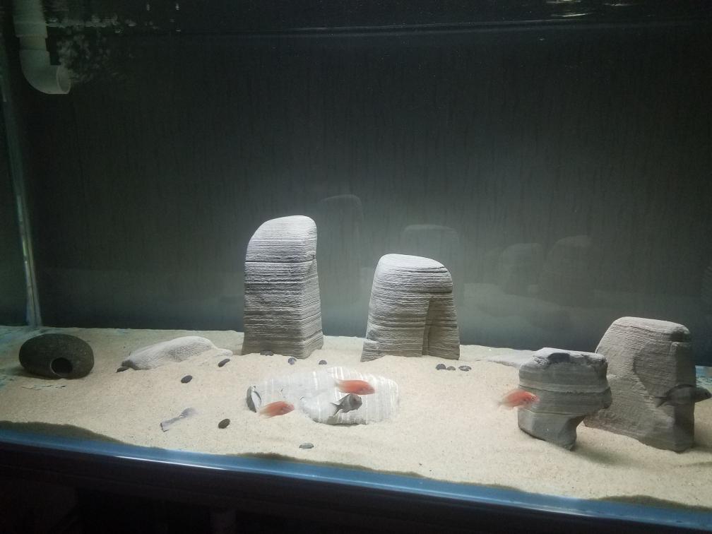 武汉印尼虎鱼光特亿智能wifl水泵试用4000L 武汉龙鱼论坛 武汉龙鱼第9张