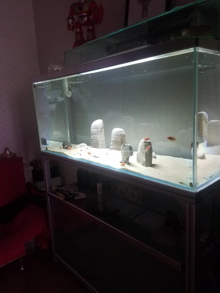 武汉印尼虎鱼光特亿智能wifl水泵试用4000L 武汉龙鱼论坛 武汉龙鱼第3张