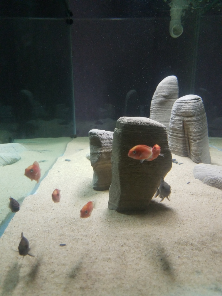 武汉印尼虎鱼光特亿智能wifl水泵试用4000L 武汉龙鱼论坛 武汉龙鱼第6张