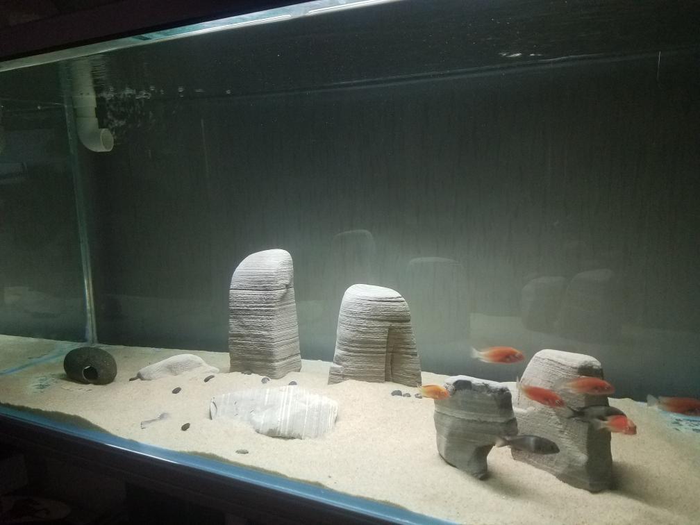 武汉印尼虎鱼光特亿智能wifl水泵试用4000L 武汉龙鱼论坛 武汉龙鱼第8张