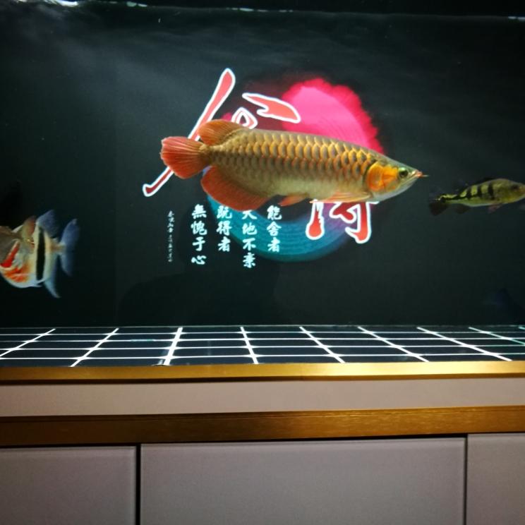 跟我快一年了 长沙观赏鱼 长沙龙鱼第2张