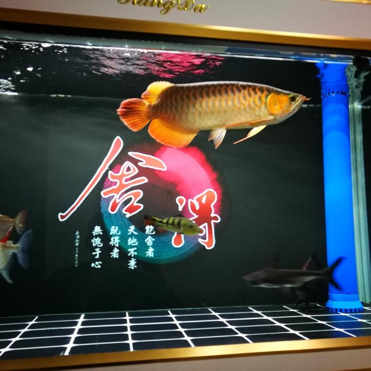 跟我快一年了 长沙观赏鱼 长沙龙鱼第1张