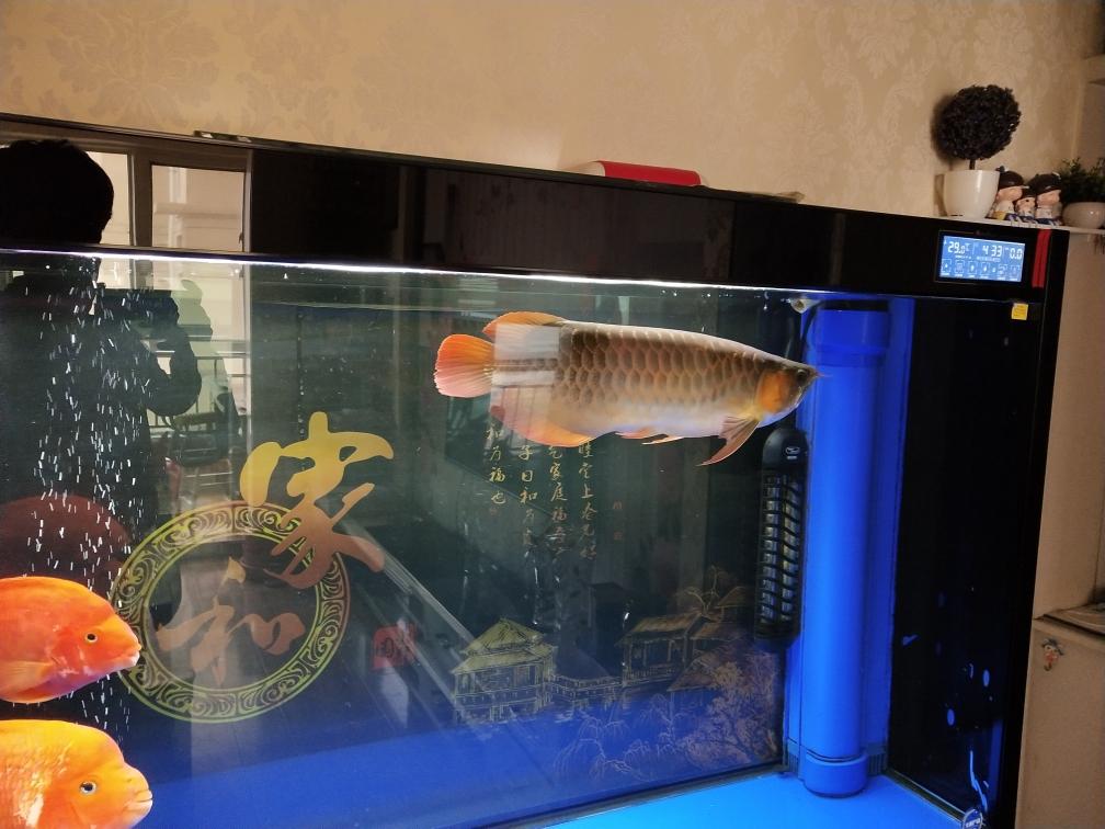 换呼和浩特鱼缸水族箱批发完水拍照留影 呼和浩特龙鱼论坛 呼和浩特龙鱼第2张