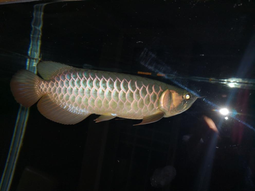 更新下小鱼龙鱼龙巅 南京水族批发市场 南京龙鱼第4张