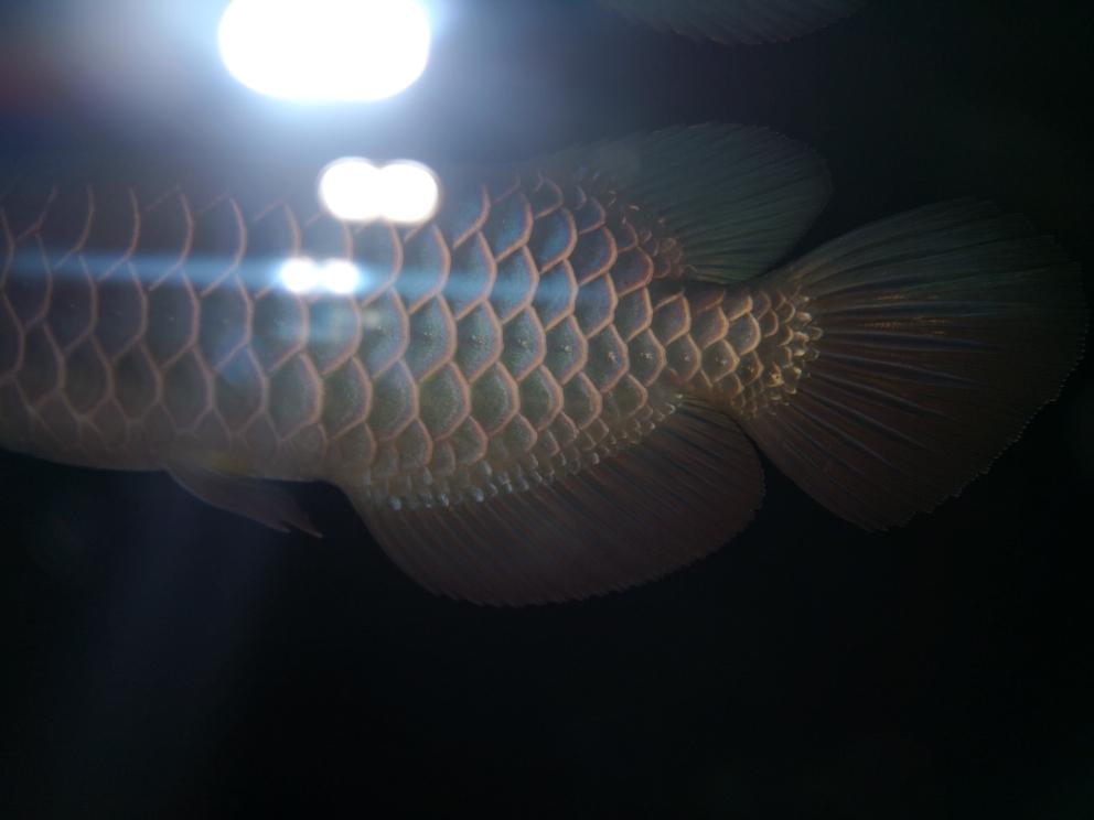 更新下小鱼龙鱼龙巅 南京水族批发市场 南京龙鱼第1张