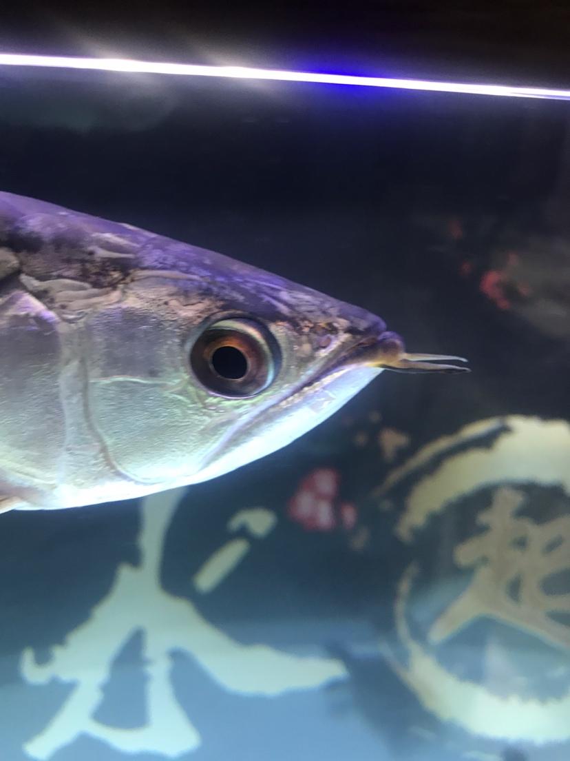 求大神帮忙养鱼小白 哈尔滨水族批发市场 哈尔滨龙鱼第2张