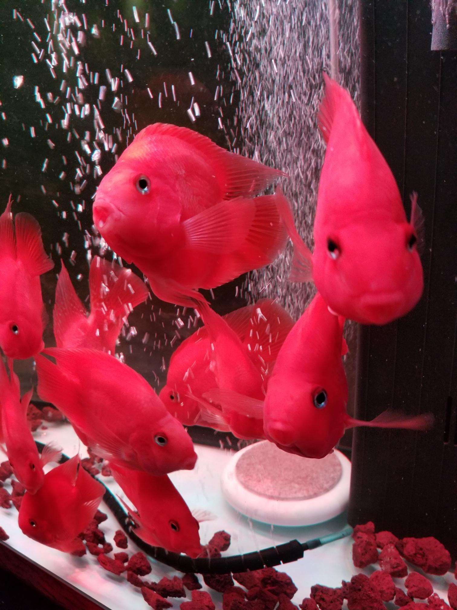 今天换水 博兴水族批发市场 博兴龙鱼第2张