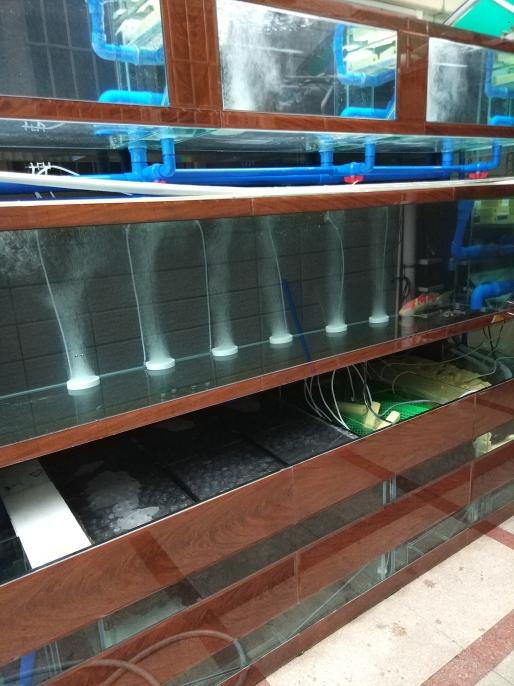 2018年最后一天鱼缸首批选手下水 温州龙鱼论坛 温州龙鱼第3张