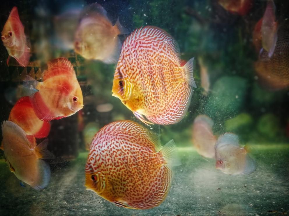 祝各位新的一年如鱼得水 深圳观赏鱼 深圳龙鱼第2张
