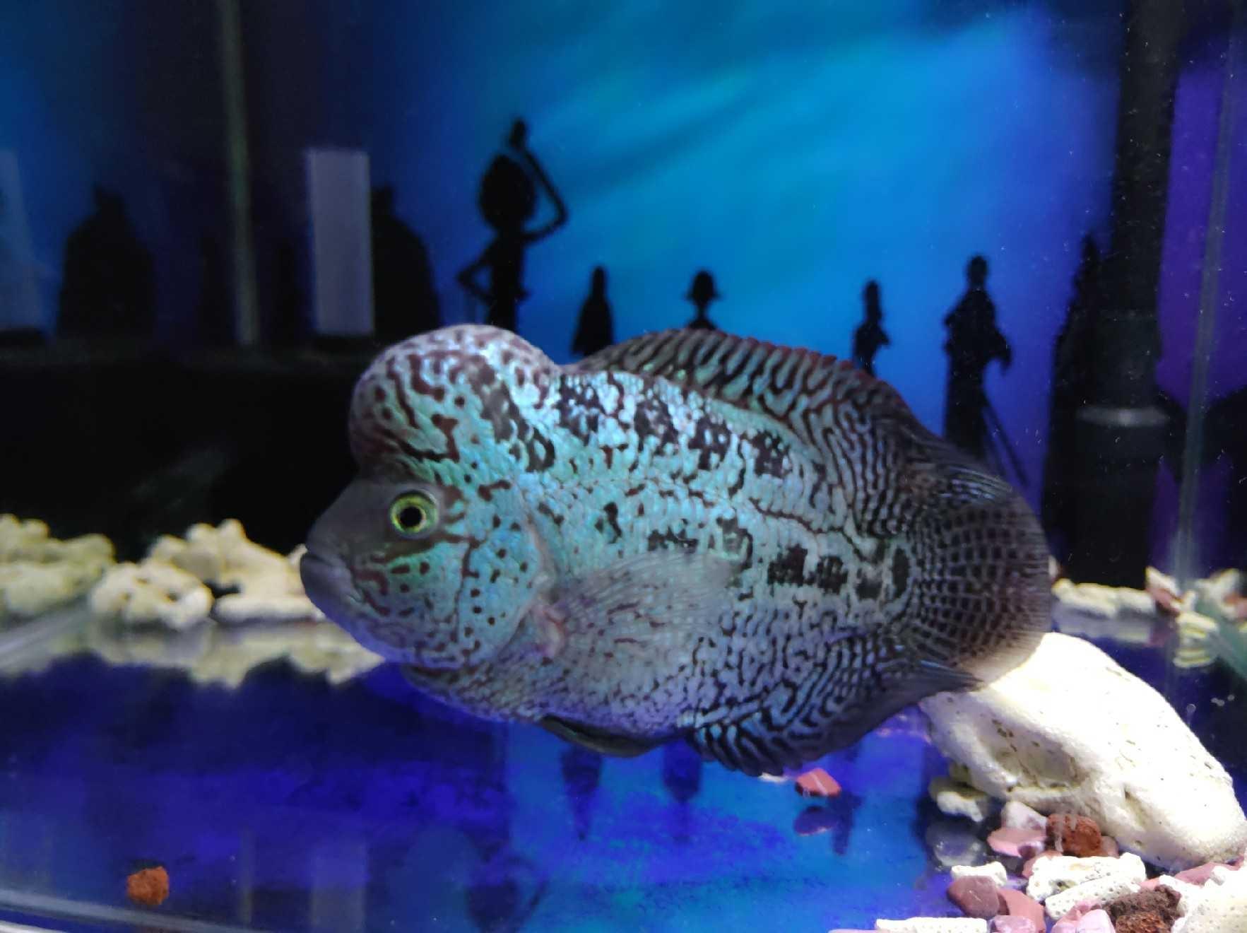 日喀则饭店专用鱼缸哪里有卖长大了想给你找个更好的人家