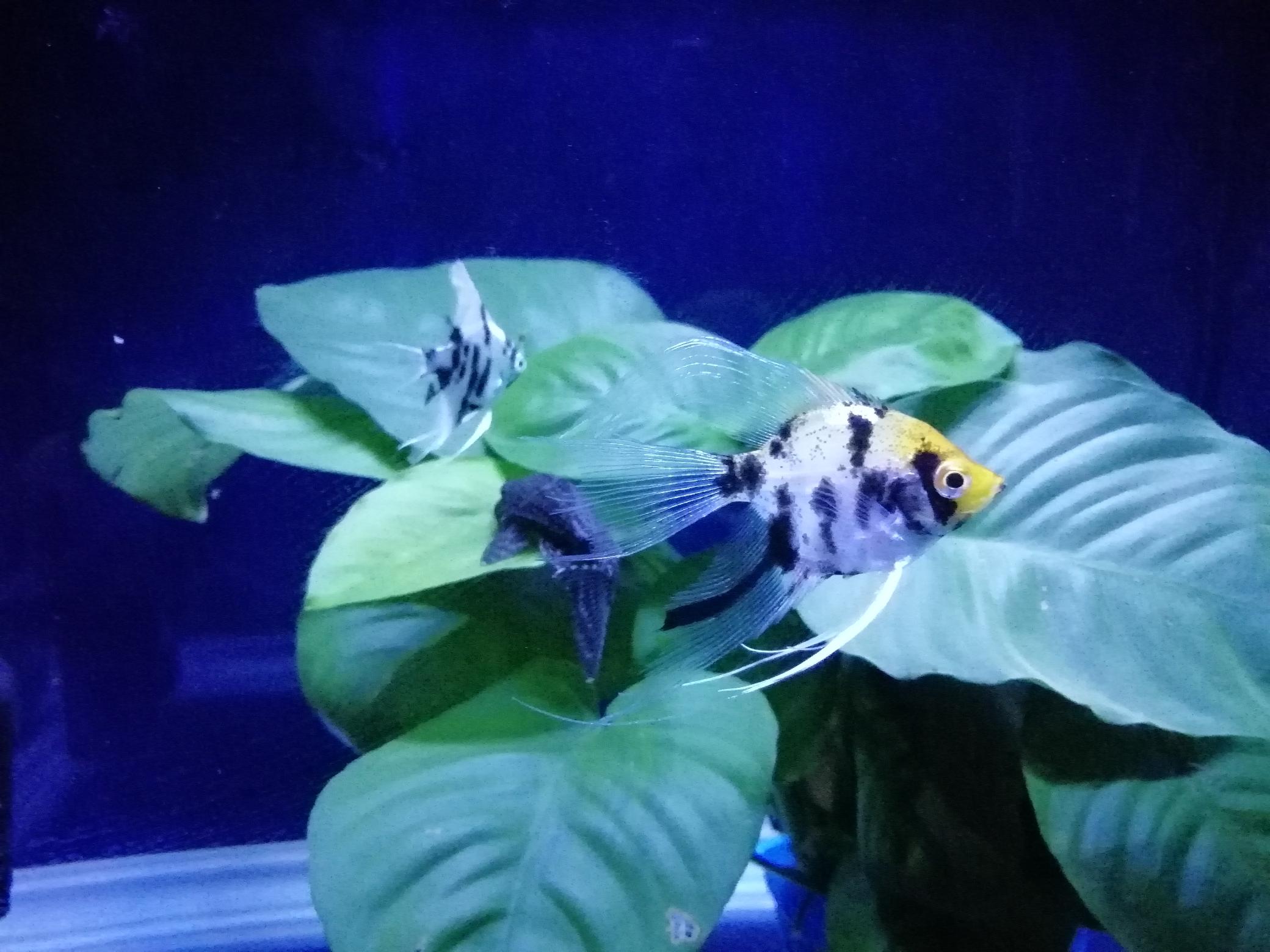 鄂州市花鸟鱼虫市场欣赏爱鱼 鄂州龙鱼论坛 鄂州龙鱼第6张