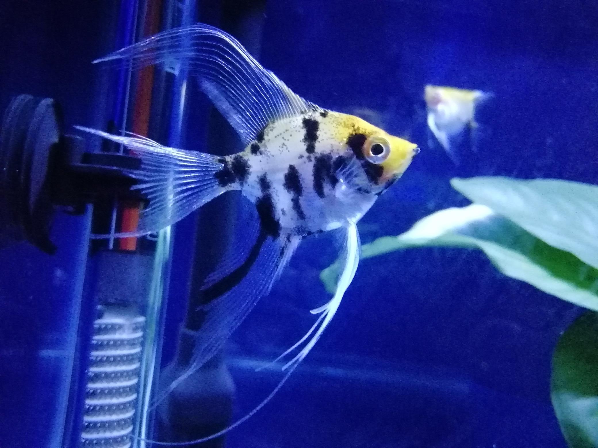 鄂州市花鸟鱼虫市场欣赏爱鱼 鄂州龙鱼论坛 鄂州龙鱼第5张