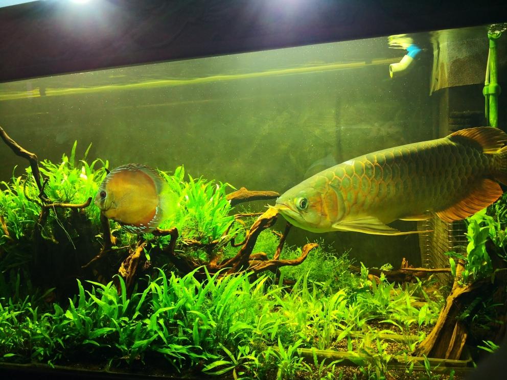 不一样的混养——生态缸龙虎魟 贵阳龙鱼论坛 贵阳龙鱼第8张