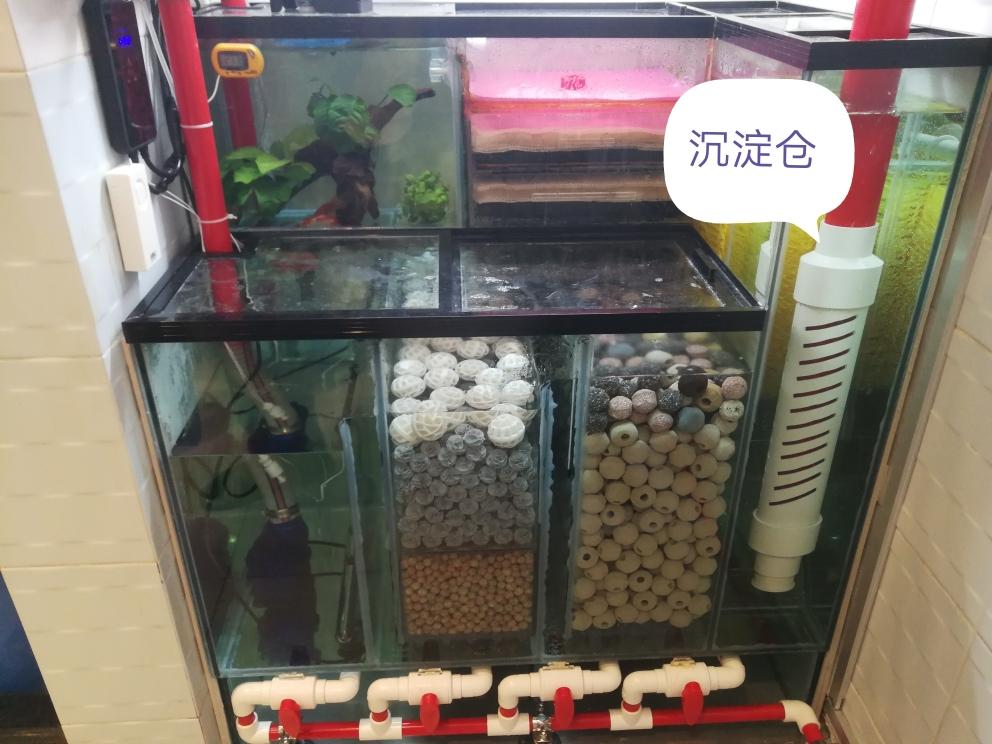 杭州永通中策电线实现了自动换水自动补水 杭州龙鱼论坛 杭州龙鱼第2张