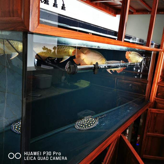那些缸事龙鱼圈 兰州龙鱼论坛 兰州龙鱼第11张