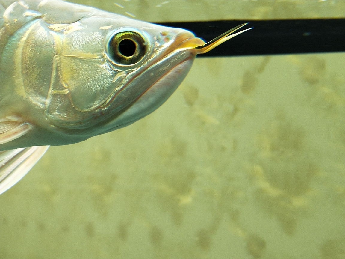 这是什么病?龙鱼圈 温州水族批发市场 温州龙鱼第2张