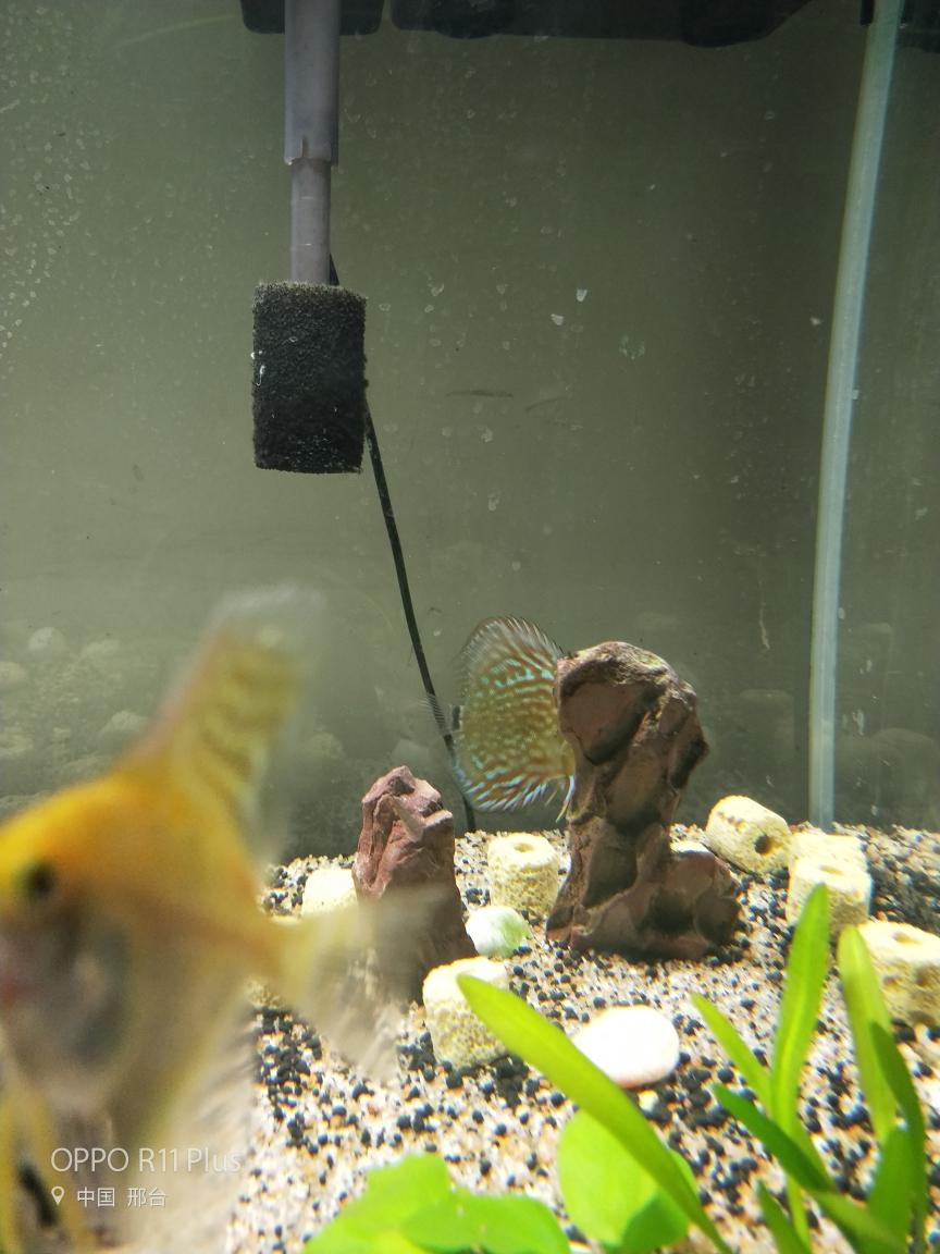 七彩躲角落不吃东西怎么办? 合肥观赏鱼
