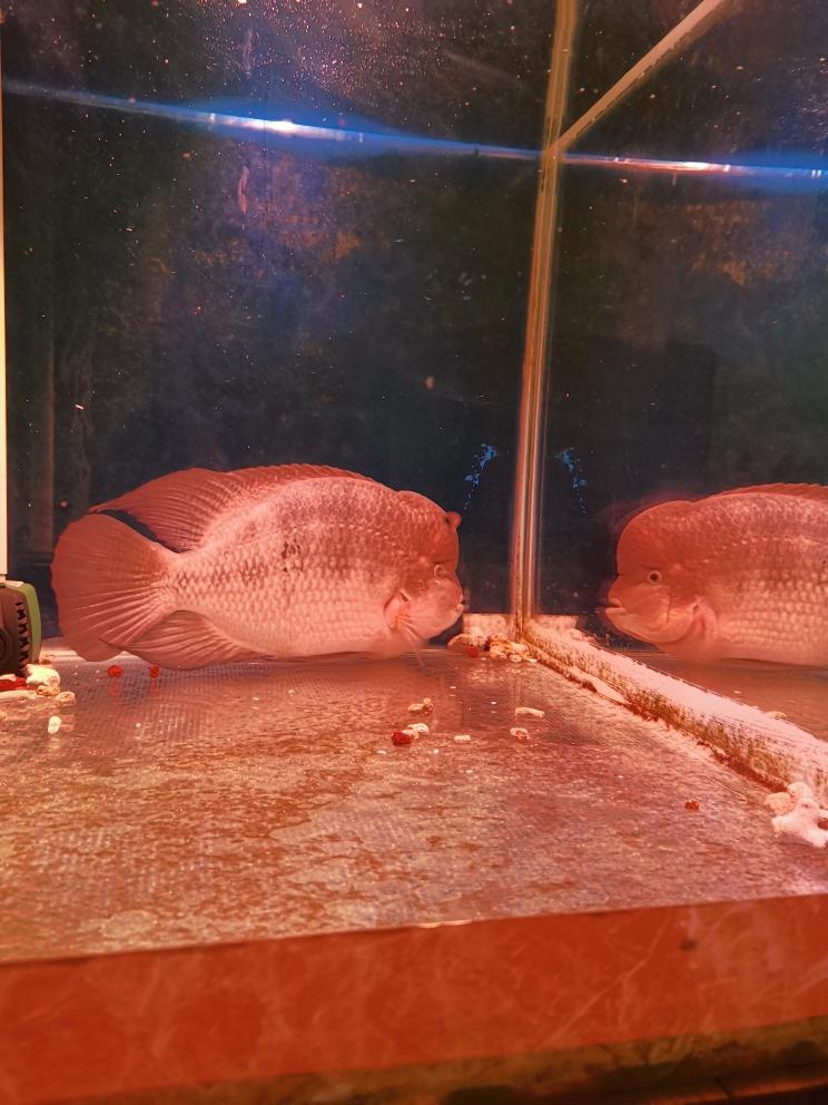 石家庄鱼缸上门服务滤镜下罗汉鱼圈 石家庄水族批发市场 石家庄龙鱼第4张