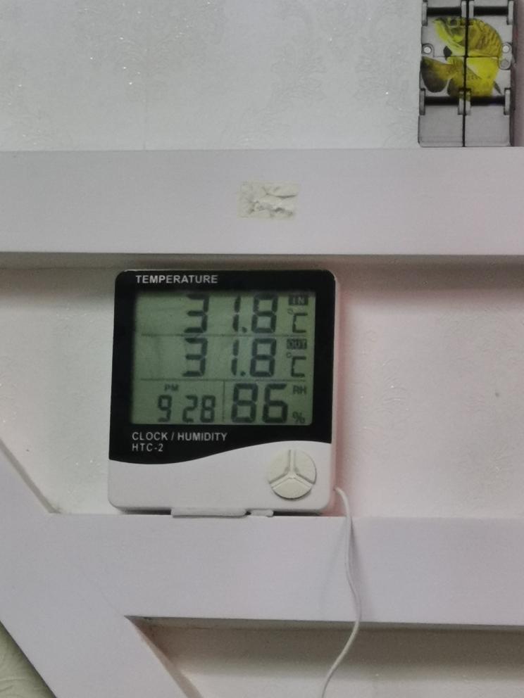 温度起来了鹦鹉鱼圈延安康源水族 延安龙鱼论坛 延安龙鱼第2张