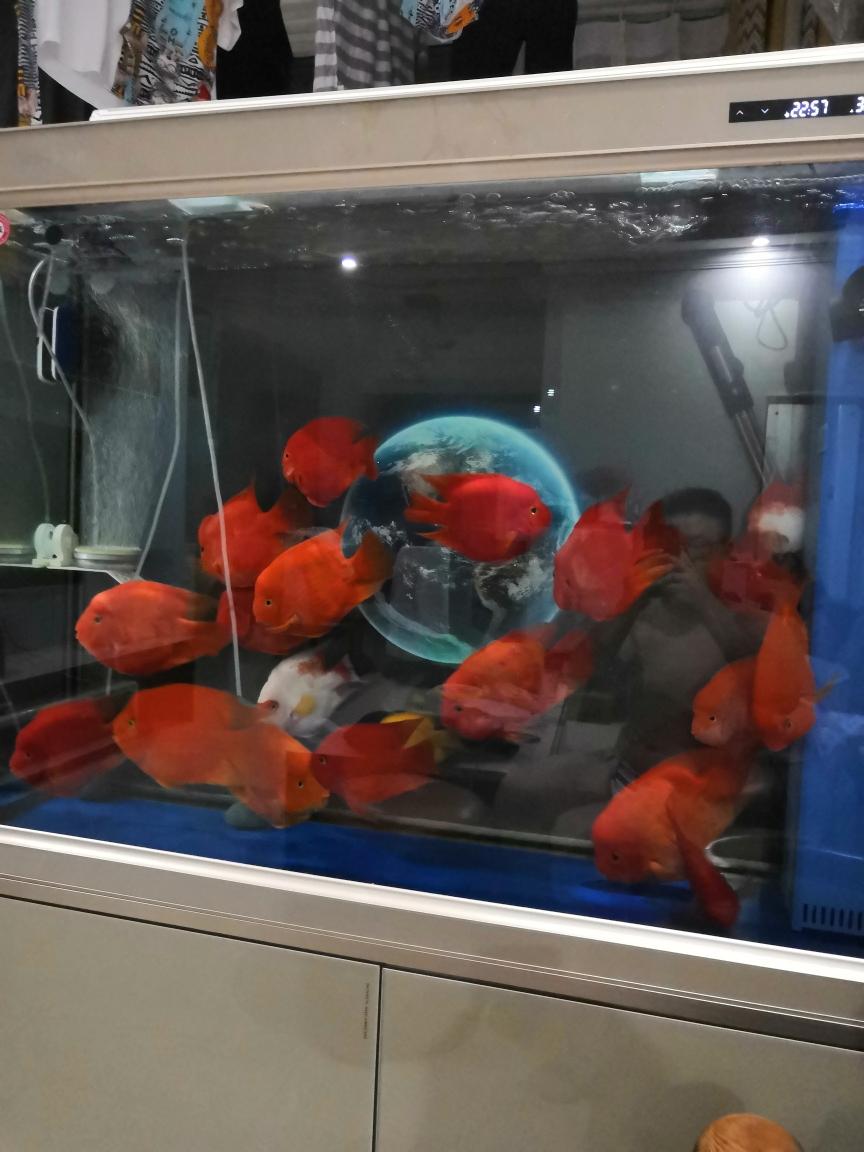 神阳饲料银川大鱼缸价格到了鹦鹉鱼圈 银川水族批发市场 银川龙鱼第4张