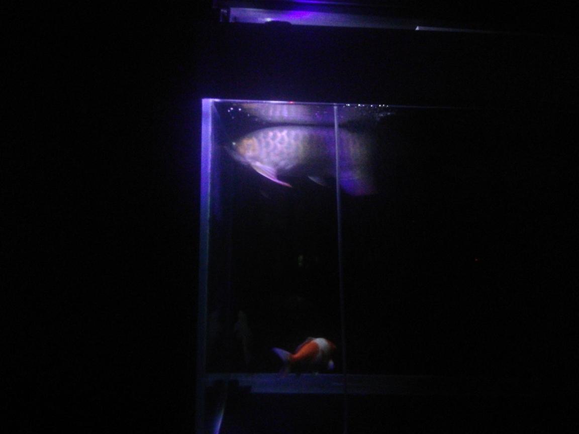 合肥宠物救助站欢乐养鱼第三棒 合肥观赏鱼 合肥龙鱼第3张