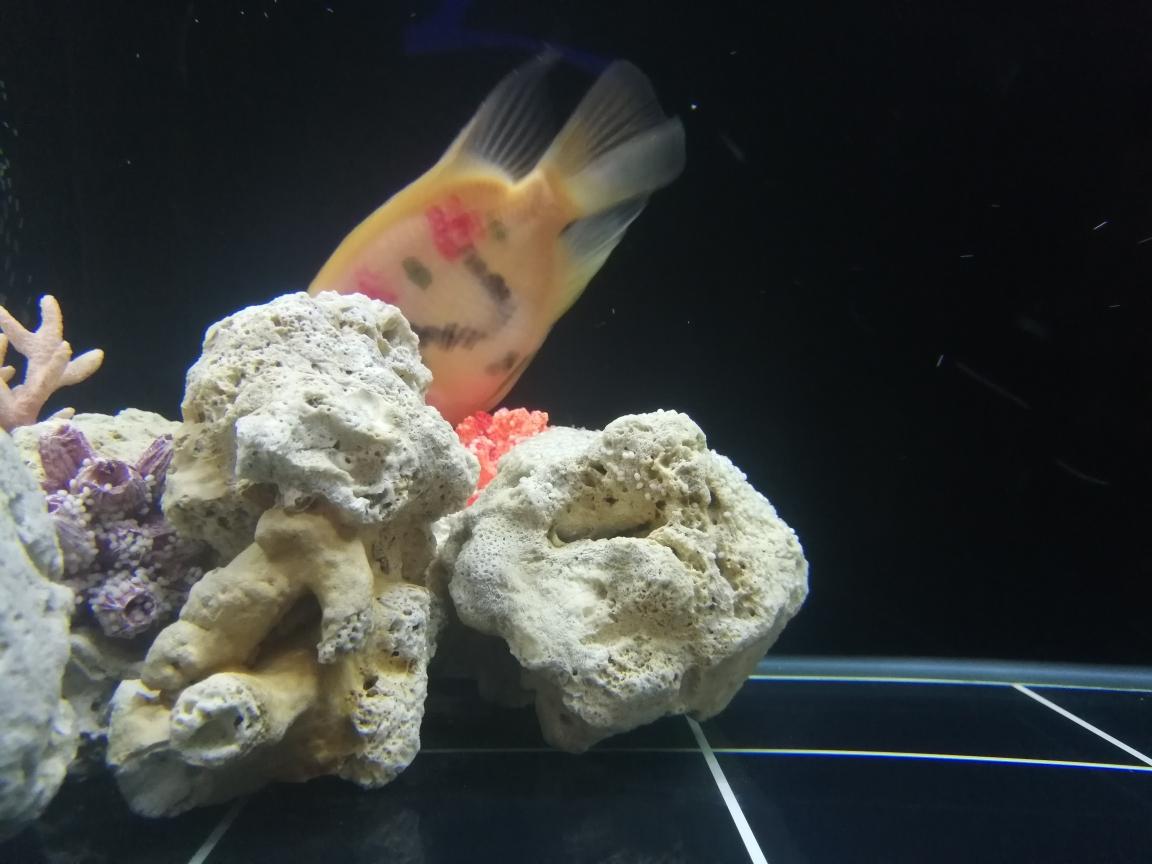 今天发现缸里珊瑚上好多这种白白的 南京水族批发市场 南京龙鱼第2张