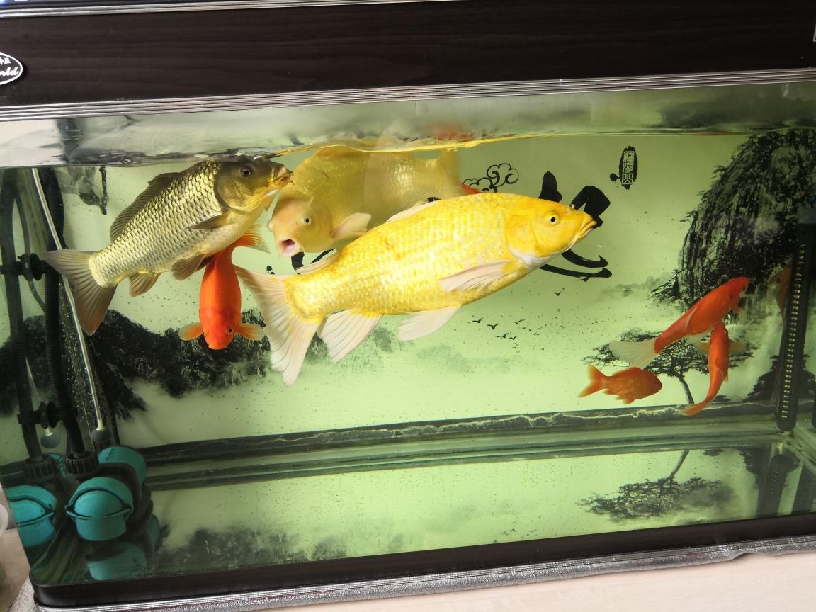 小白烂肉出太原水族馆在哪里血康复了分享经验 太原龙鱼论坛 太原龙鱼第4张