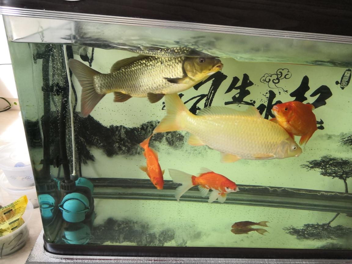 小白烂肉出太原水族馆在哪里血康复了分享经验 太原龙鱼论坛 太原龙鱼第1张
