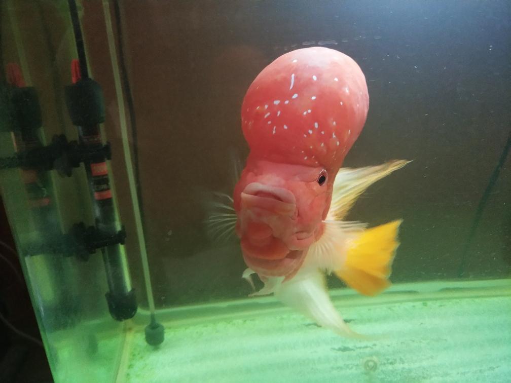 西安海洋馆怎么去这个头型怎么样 西安水族批发市场 西安龙鱼第4张