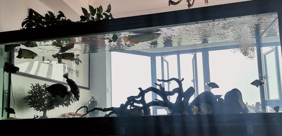 龙鱼缸布景-虎鱼-龙巅鱼邻 重庆龙鱼论坛 重庆水族批发市场第2张