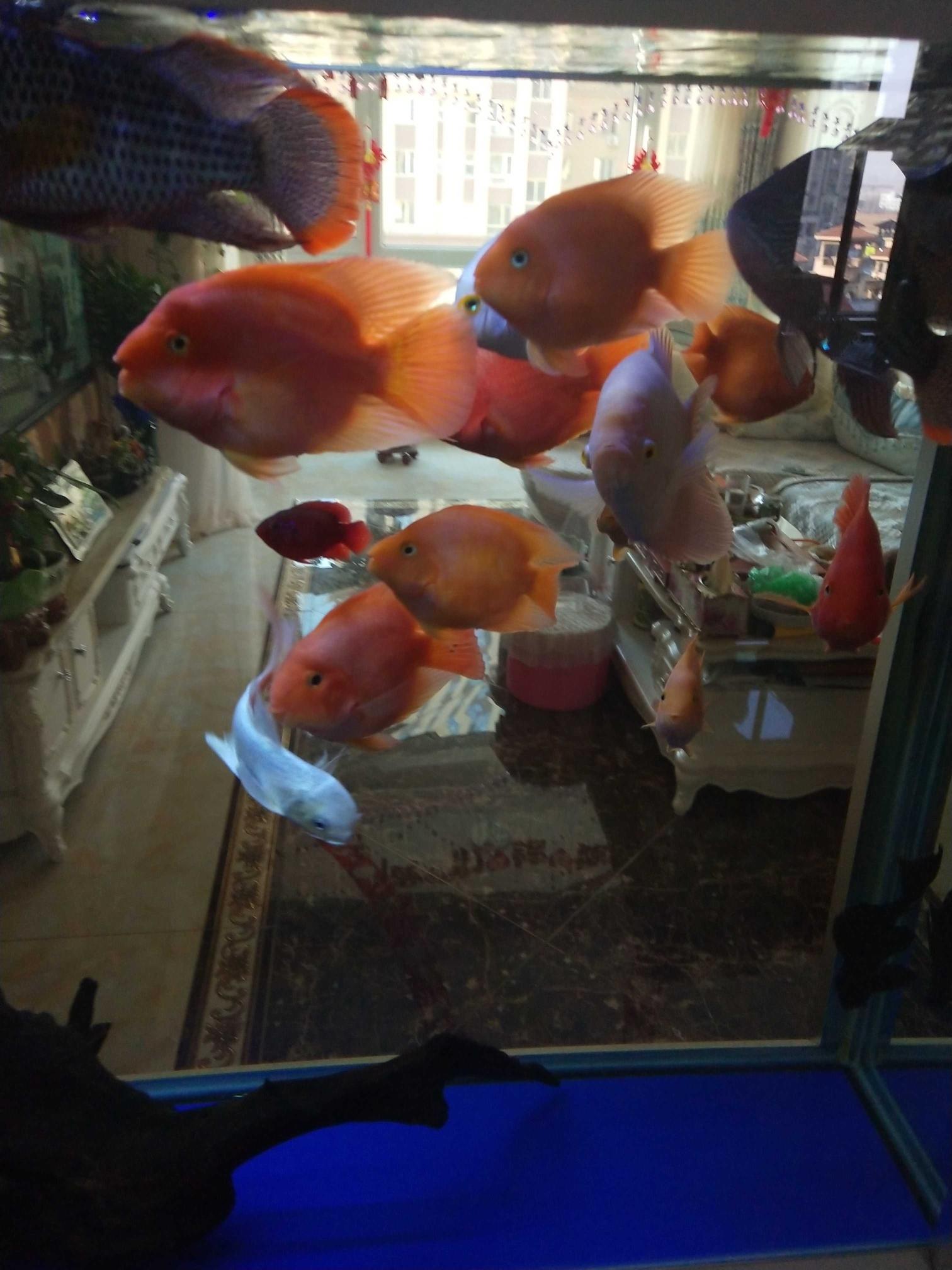 贵阳哪个水族店卖黑桃A鱼大家好,我是的独乐乐众乐乐 贵阳水族批发市场 贵阳龙鱼第9张