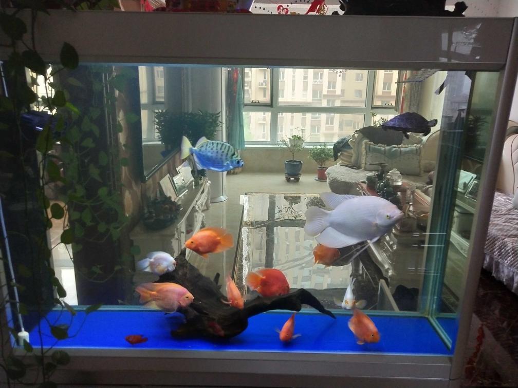 贵阳哪个水族店卖黑桃A鱼大家好,我是的独乐乐众乐乐 贵阳水族批发市场 贵阳龙鱼第10张