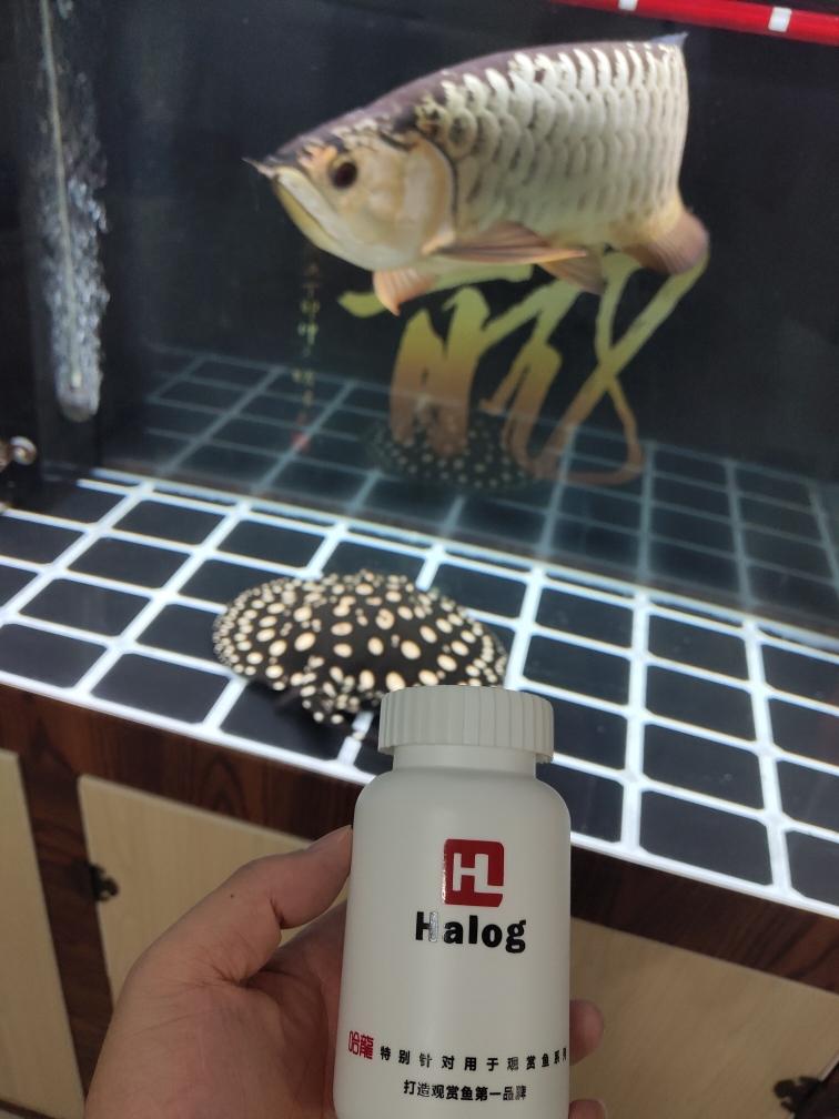 武汉白化巴西龟价格哈龙硝化细菌试用 武汉水族批发市场 武汉龙鱼第1张