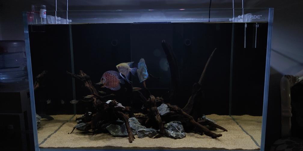 合肥红眼白子关刀鱼怎么养合肥有几个花鸟市场没养过七彩欢迎大家提意见 合肥龙鱼论坛 合肥龙鱼第3张