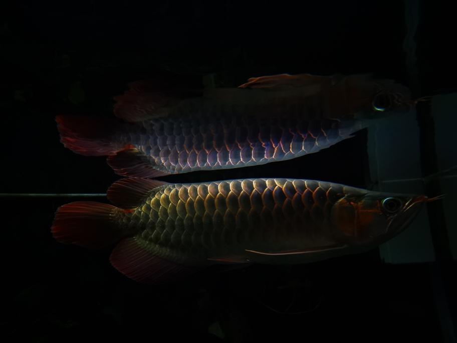 南京布隆迪六间哪个店的最好快乐的折腾 南京水族批发市场 南京龙鱼第5张