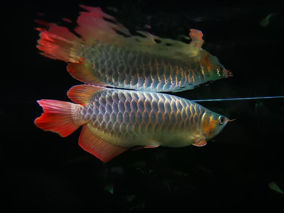 南京布隆迪六间哪个店的最好快乐的折腾 南京水族批发市场 南京龙鱼第1张