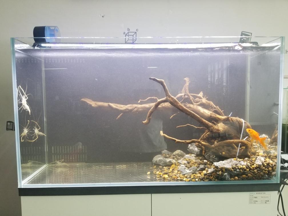 骨架好了接下来整植物 银川水族批发市场 银川龙鱼第1张