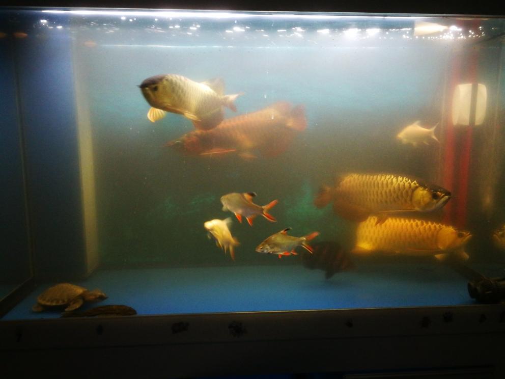 加点营养 太原观赏鱼