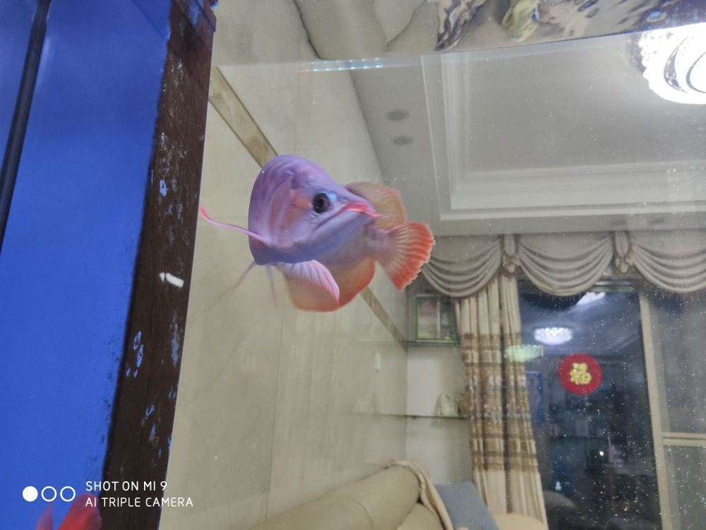 传说中的空气缸! 长沙龙鱼论坛 长沙龙鱼第1张