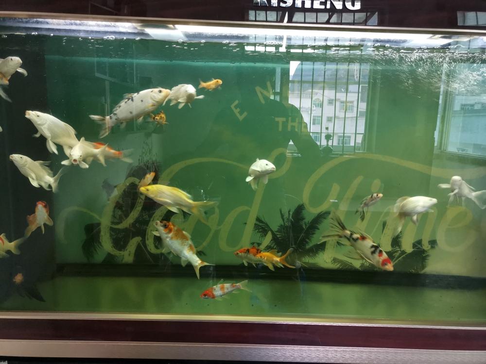 锦鲤多少色温的T8灯管?郑州水族论坛打不开 郑州水族批发市场