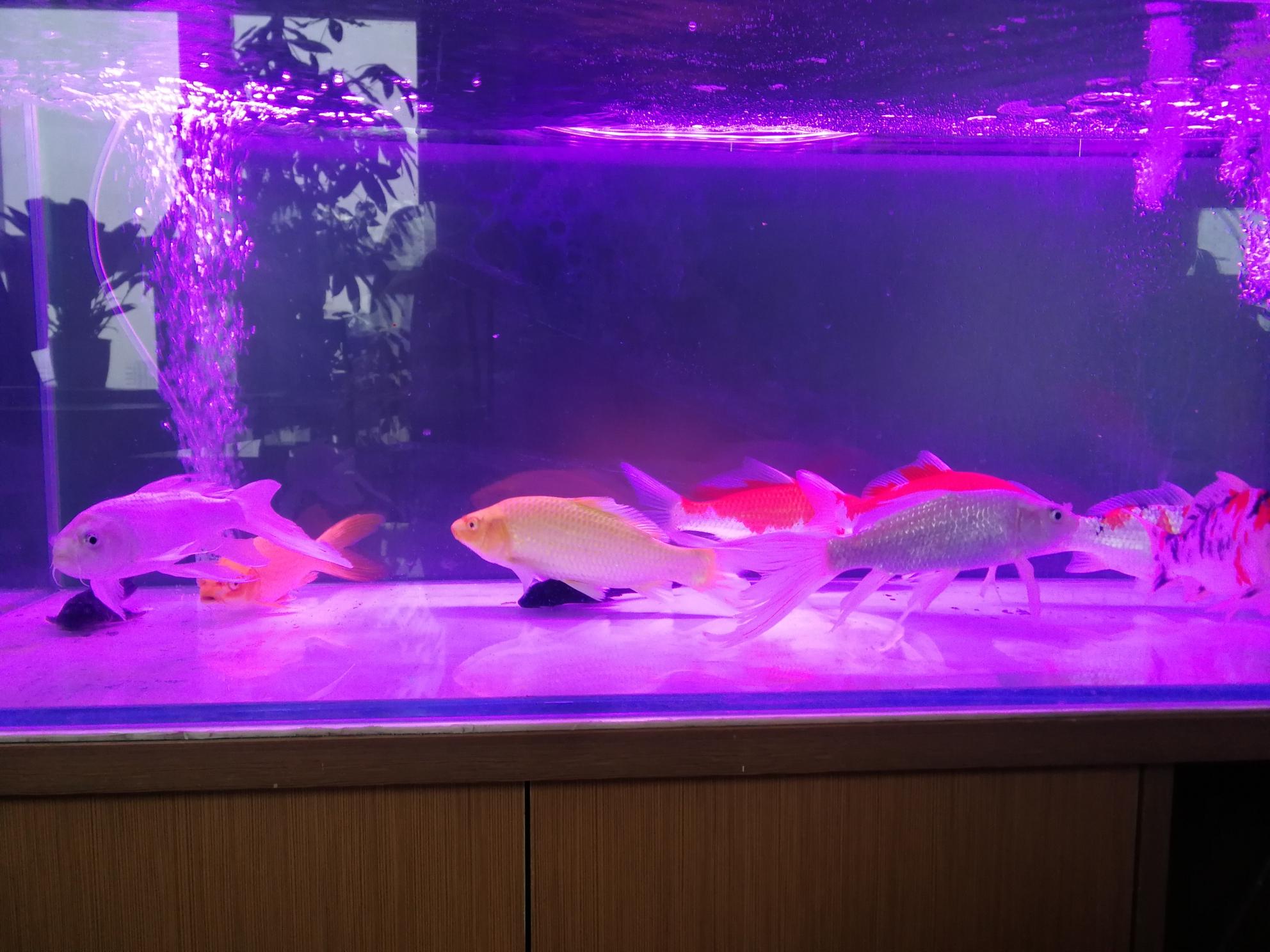 新引錦鯉 吉林龍魚論壇 吉林龍魚第5張