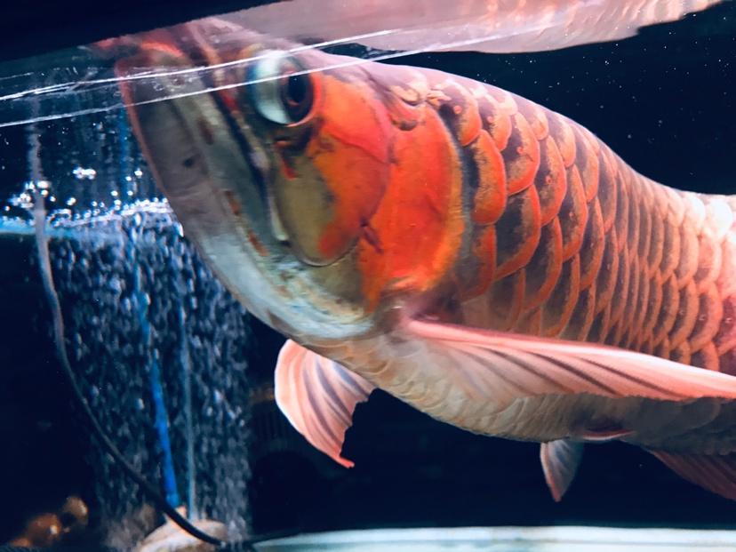 哈尔滨龙鱼批发可以在这个周末发布 哈尔滨龙鱼论坛 哈尔滨龙鱼第3张