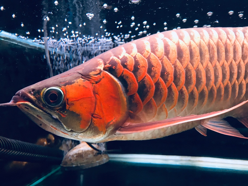 哈尔滨龙鱼批发可以在这个周末发布 哈尔滨龙鱼论坛 哈尔滨龙鱼第4张