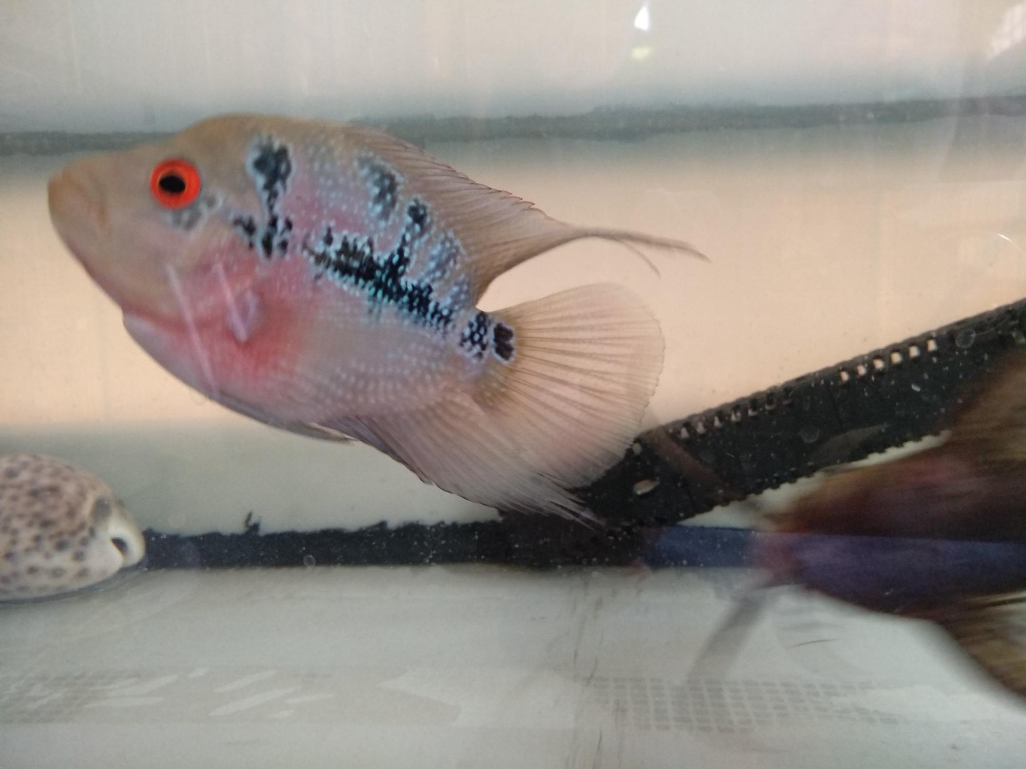 这是麒麟鹦鹉吧? 西安龙鱼论坛 西安龙鱼第5张