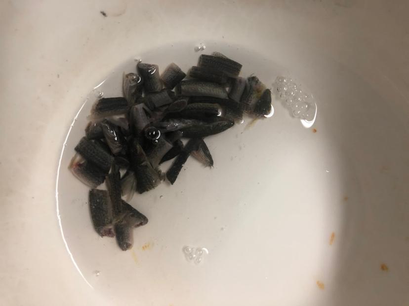 绵阳通川区观赏鱼闲在家的日常 绵阳水族批发市场 绵阳水族批发市场第4张