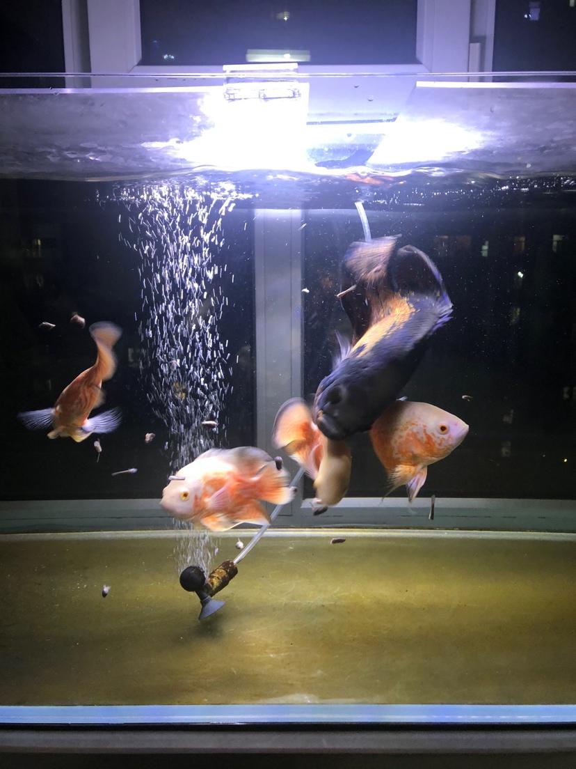 绵阳通川区观赏鱼闲在家的日常 绵阳水族批发市场 绵阳水族批发市场第7张