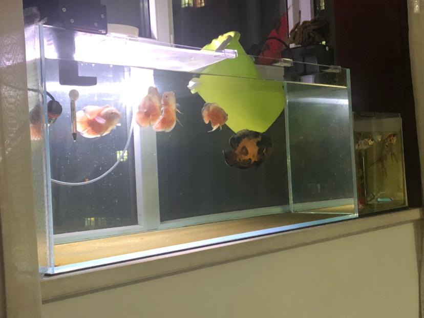 绵阳通川区观赏鱼闲在家的日常 绵阳水族批发市场 绵阳水族批发市场第2张